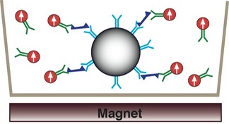 cell magnetic assay