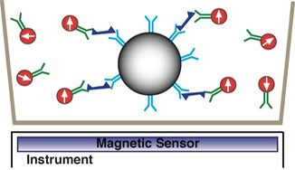 cell surface receptor magnetic assay